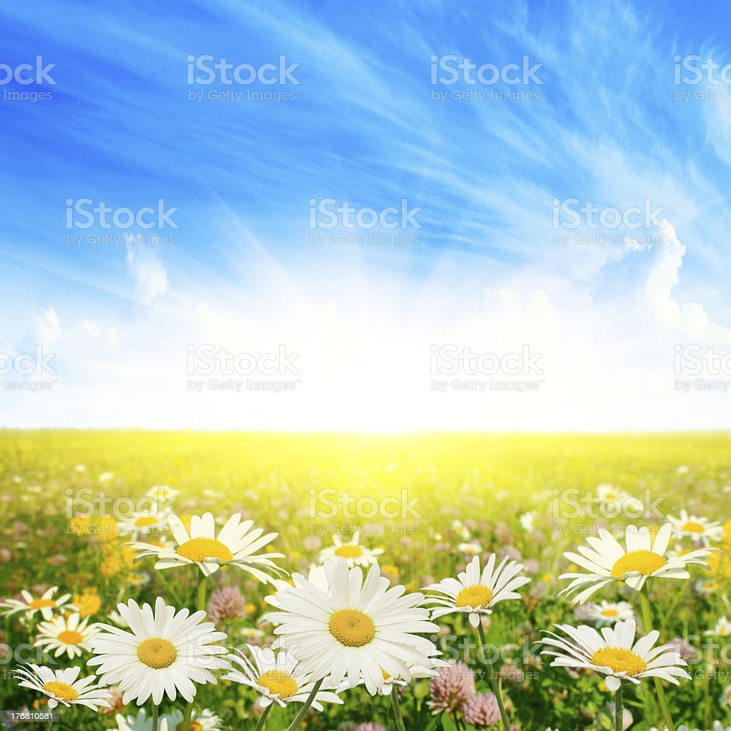 Summer day. royalty-free stock photo