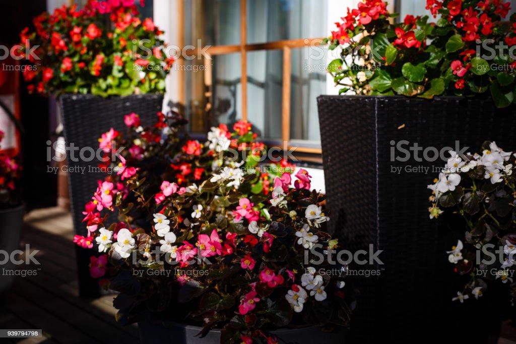 Decorado De Verano Terraza En Diseño De Flores De La Terraza