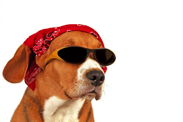 summer dog stock photo