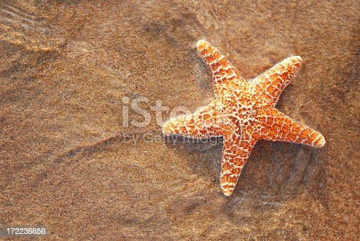 Star fish.More sea stars at:Starfish Lightbox