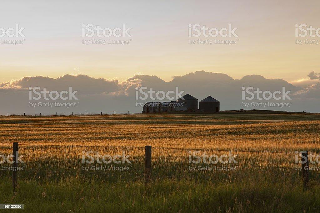 Summer evening in Alberta royalty-free stock photo