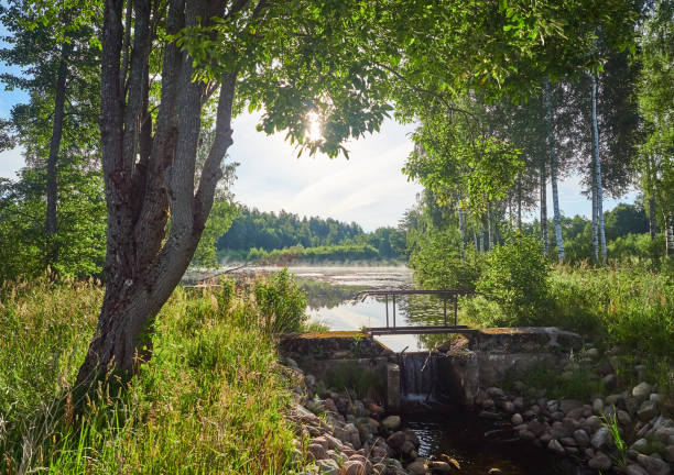 Summer evening landscape of the forest stock photo