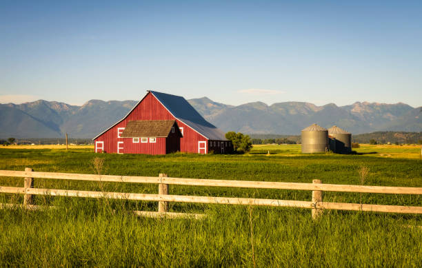 Summer evening with a red barn in rural Montana stock photo