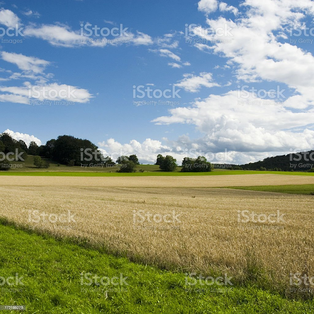 Summer Farm royalty-free stock photo