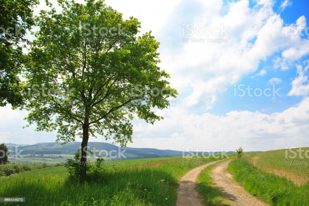 Summer field and road royalty-free stock photo