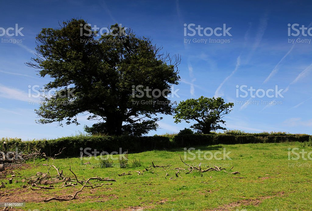 Summer Field Hedge Row royalty-free stock photo