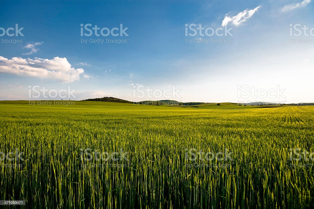 Summer Field II royalty-free stock photo