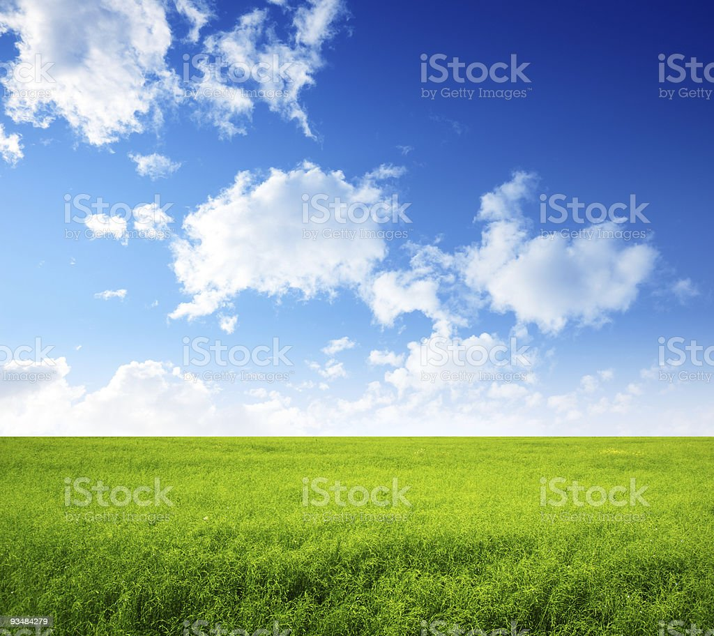 summer field of green grass royalty-free stock photo