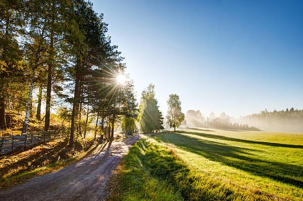 summer field - summer sweden bildbanksfoton och bilder