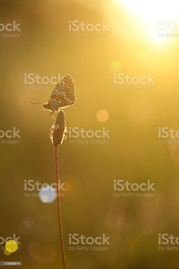 Summer field sunset on flower and sun stock photo