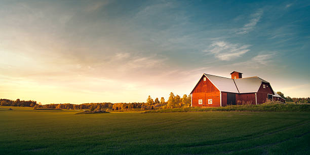 Summer field with red barn Swedish nature and landscape. barn stock pictures, royalty-free photos & images