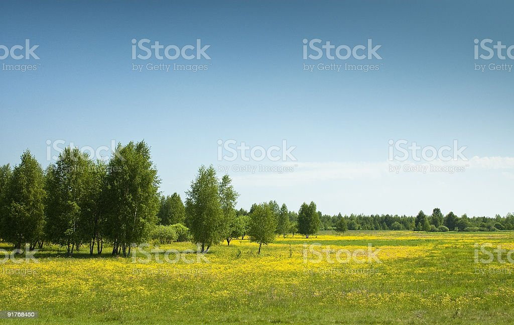 Summer fields & alley stock photo