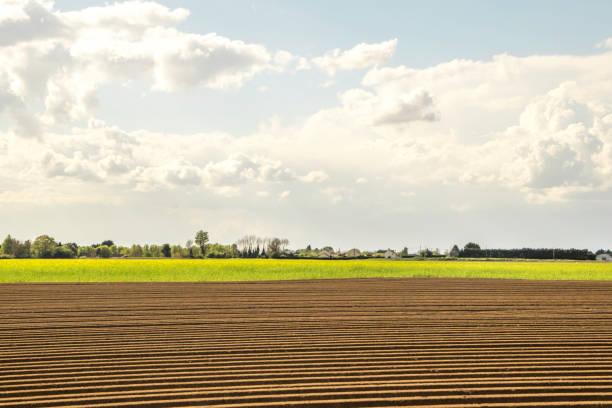 夏季領域 - 林肯郡 個照片及圖片檔