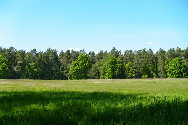 Summer Fields Treeline behind a summer field. treelined stock pictures, royalty-free photos & images