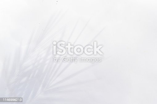 Summer scenery with tropical palm leaves shadows on gray background with copy space