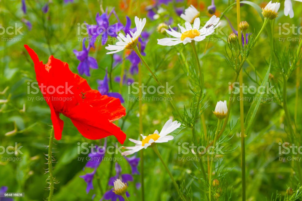 Summer floral background royalty-free stock photo