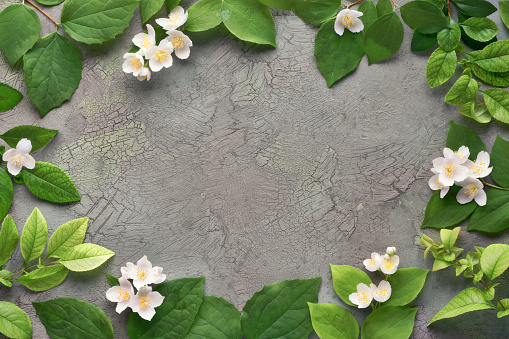Summer floral background with fresh Philadelphus flowers, also known as mock-orange.