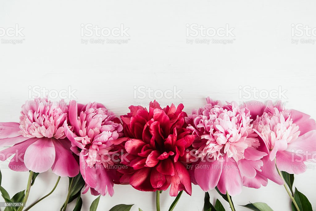 Summer floral background with pink and red peonies stock photo
