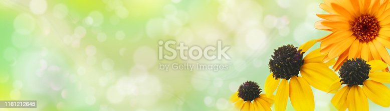 istock Summer floral banner. Сalendula and rudbeckias against light green background with copy space. Flower corollas close up. Soft bokeh. Landscape panorama. Dreamy, romantic, airy, elegant image 1161212645