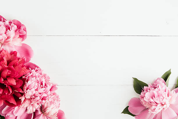 Royalty Free Peony Pictures Images And Stock Photos Istock
