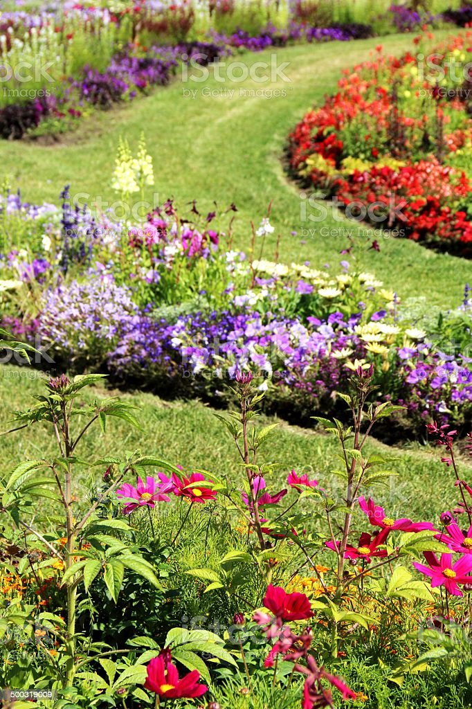 Summer flower garden royalty-free stock photo