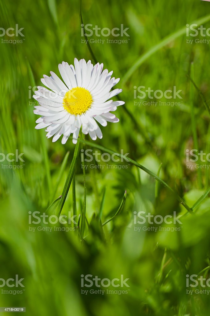 Summer flower. Macro shooting royalty-free stock photo