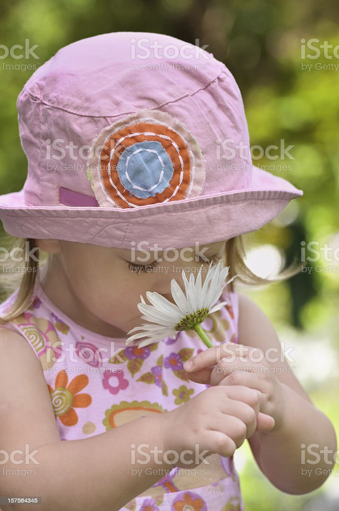 Summer flower royalty-free stock photo