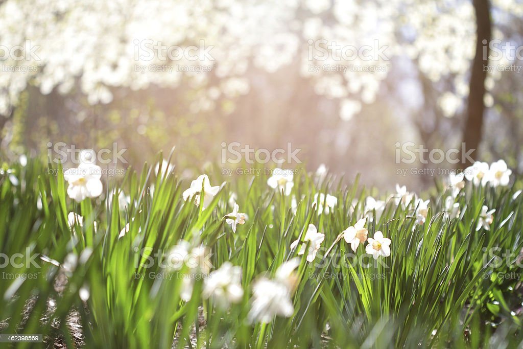 Summer Flowers Background stock photo