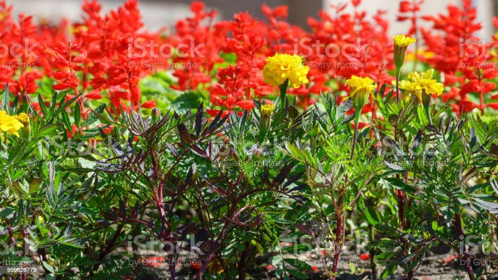 Jardín de flores de verano - Foto de stock de Alegría libre de derechos