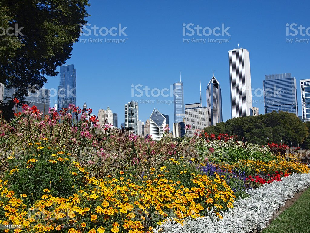 Summer Flowers in Grant Park Chicago, Illinois stock photo