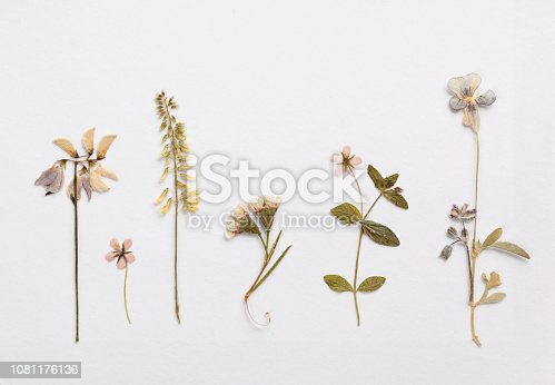 Different dried flowers on textured paper