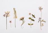 紙の上の夏の花