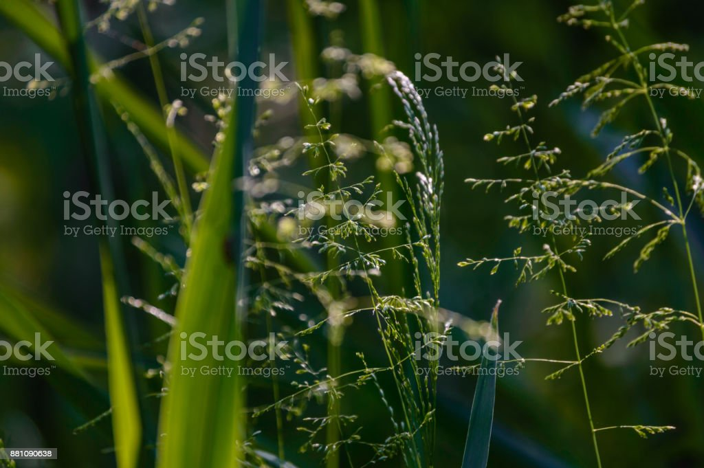 summer flowers on green background stock photo