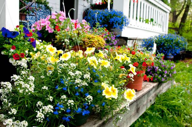 summer flowers - perenn bildbanksfoton och bilder