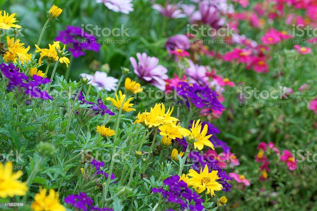 Summer flowers stock photo