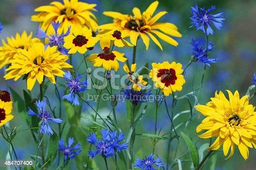 Summer flowers, Germany, Eifel.
