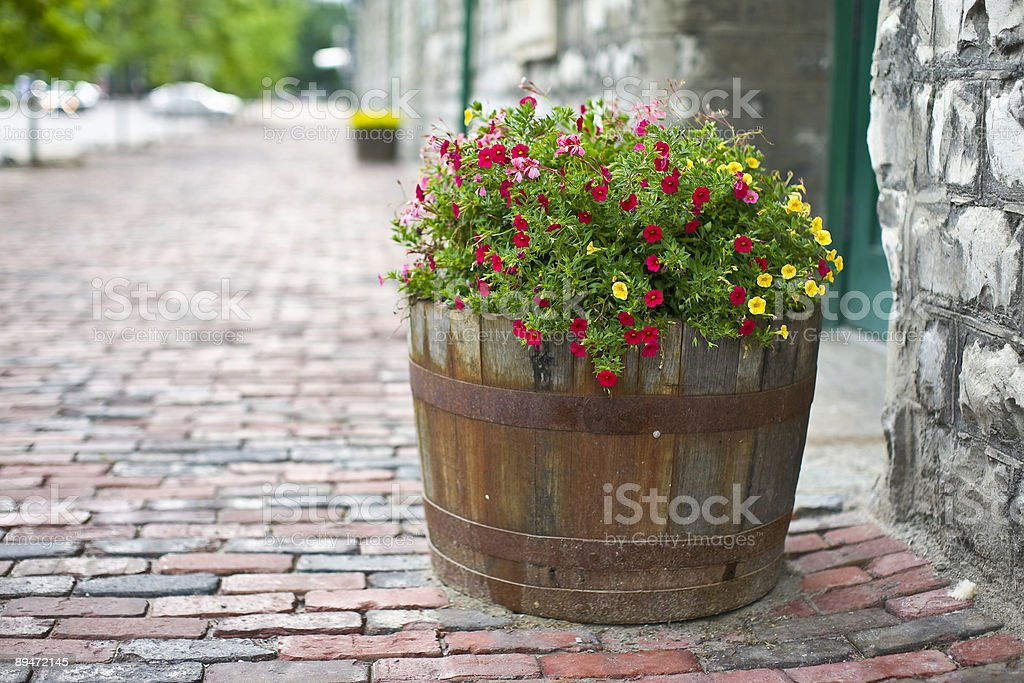 Summer flowers royalty free stockfoto