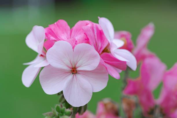 Summer flowers picture id976298534?b=1&k=6&m=976298534&s=612x612&w=0&h=efidvsly4wjzvjcppgaxtfnaagrsbkojkvk7i0vjxds=