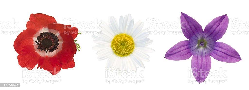 Summer flowers - Poppy, Daisy and Bellflower (XXL) royalty-free stock photo