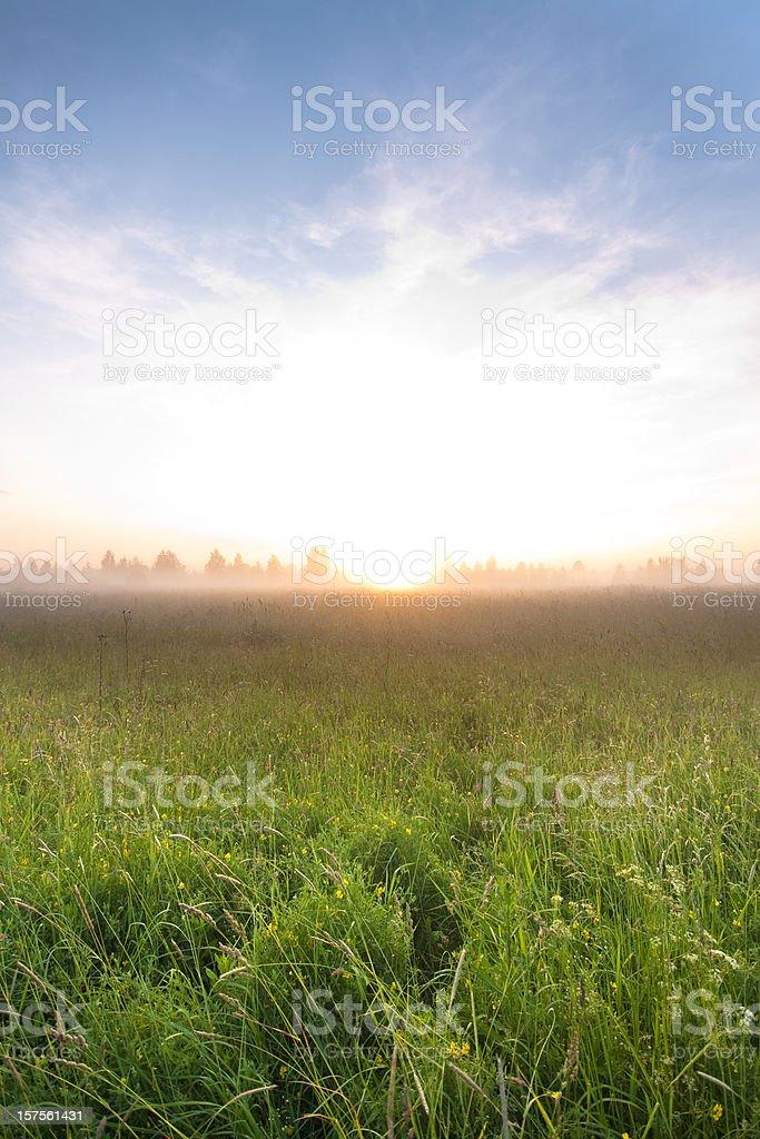Summer foggy day royalty-free stock photo