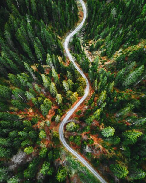 summer forest aerial view in switzerland stock photo