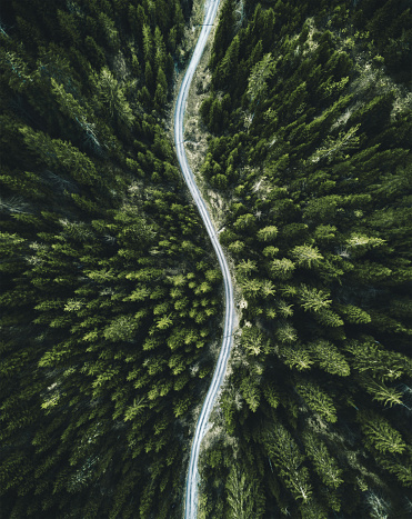 summer forest aerial view in switzerland