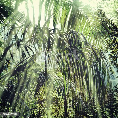 istock Summer forest jungle 504422346