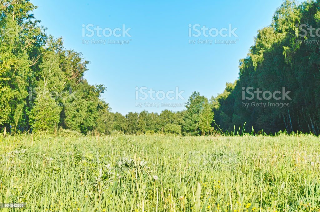 Summer forest meadow landscape background royalty-free stock photo