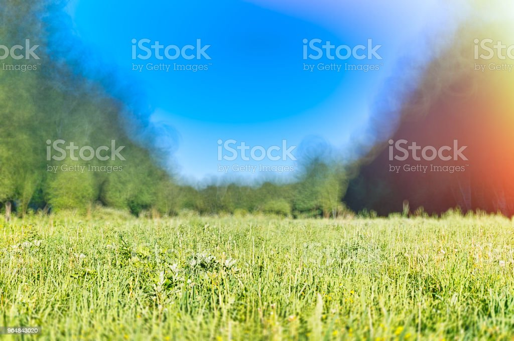 Summer forest meadow landscape bokeh background royalty-free stock photo
