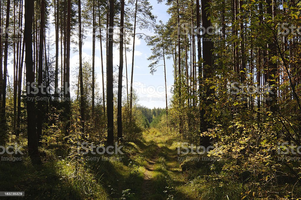 Summer Forest Path royalty-free stock photo