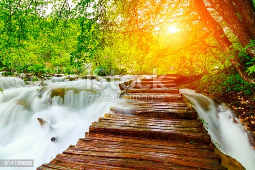 Summer forest pathway in plitvice national park-Croatia