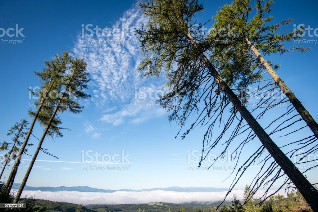 summer forest trees. nature green wood sunlight backgrounds photo libre de droits