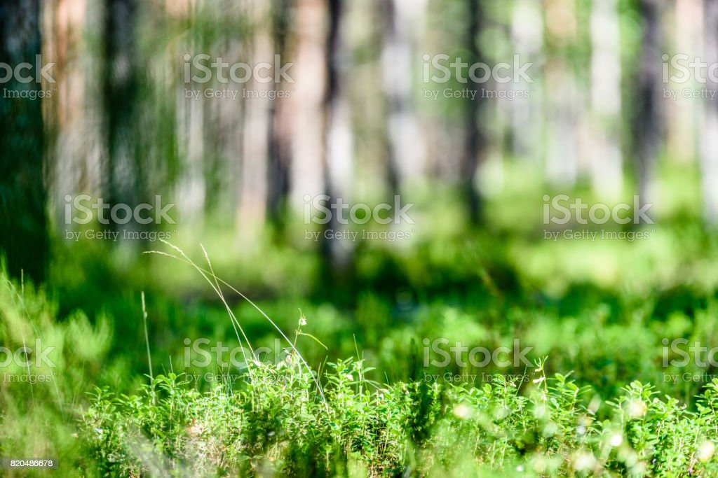 Scenic Scenery with Sunbeams in The Forest Sunny Summer Day Morning View Casual Swim Trunks All