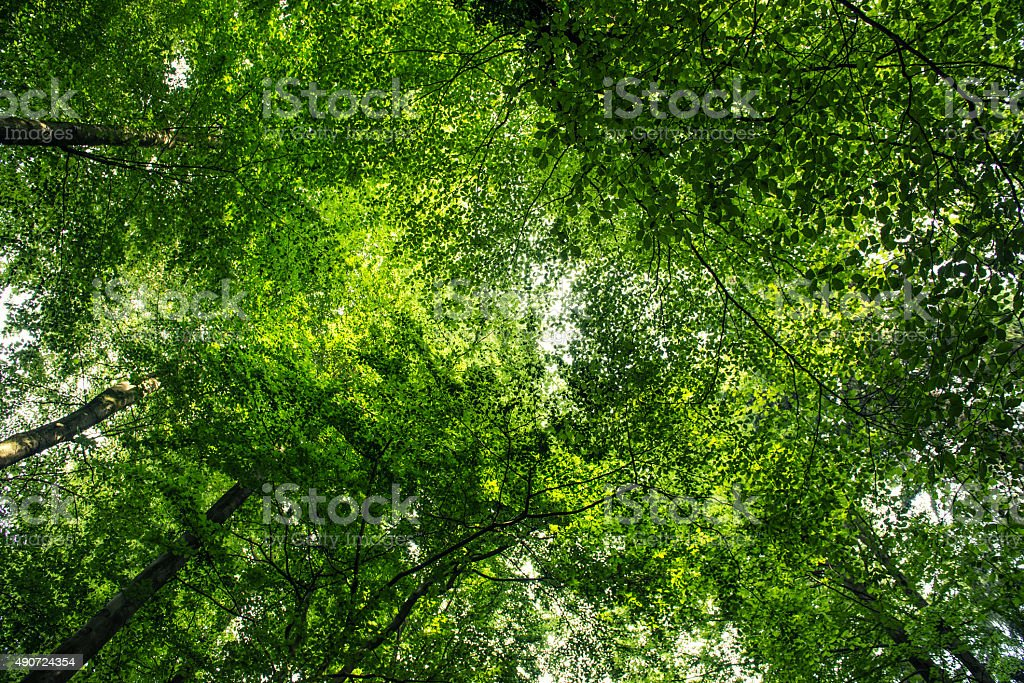 Summer forest treetops stock photo